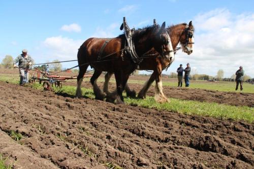 Ploughing horsepower3
