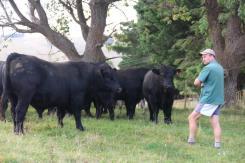 Dandaloo bulls3